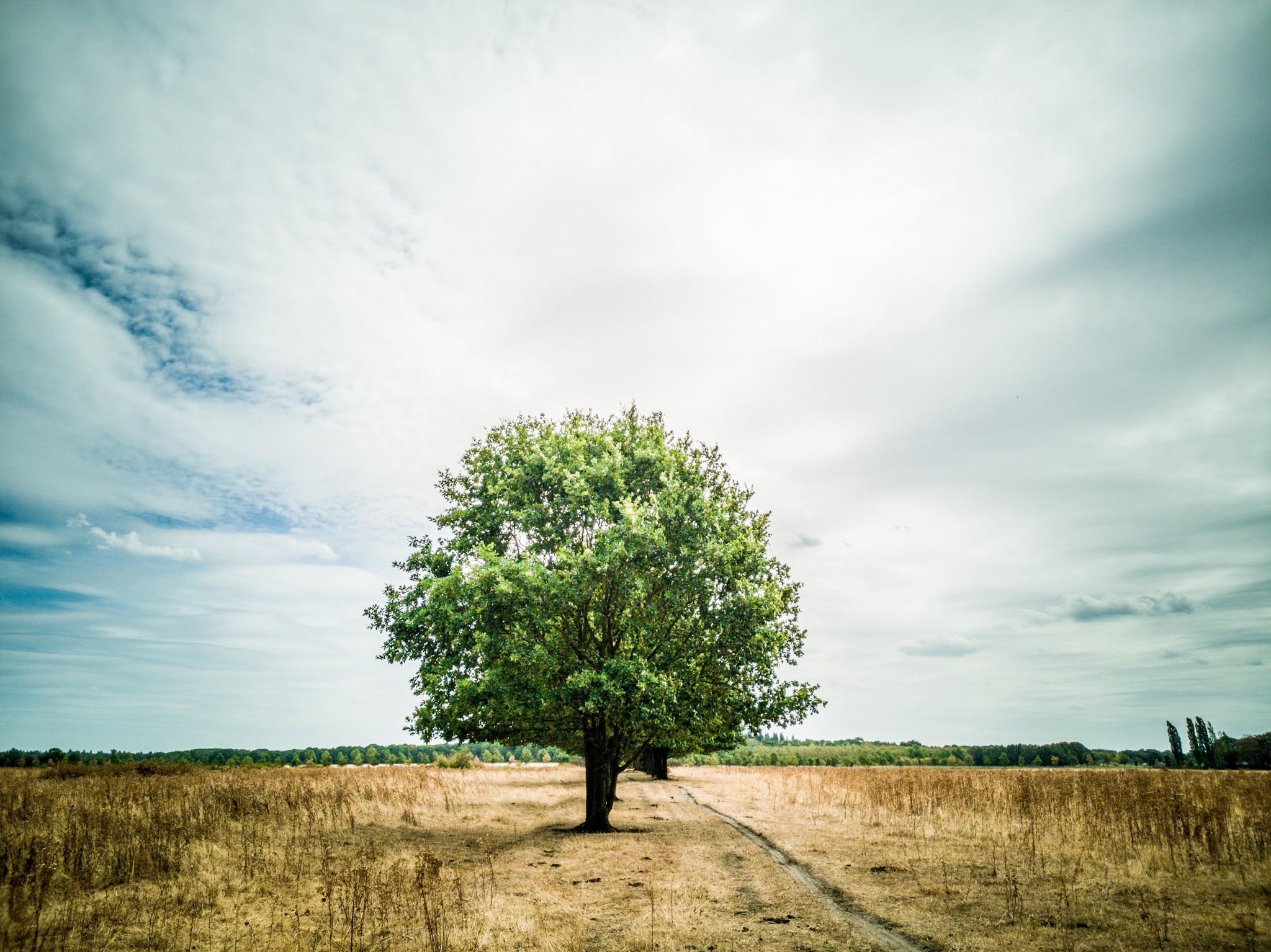 Het voorkomen van wateroverlast en droogte